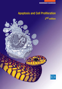 Apoptosis and Cell Proliferation — обложка книги.