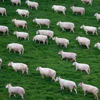 Не нужно считать овец.