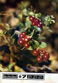 Юный натуралист №07/1977 — обложка книги.