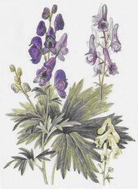 Ядовитые растения (комплект открыток) — обложка книги.