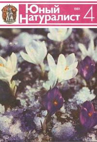 Юный натуралист №04/1981 — обложка книги.
