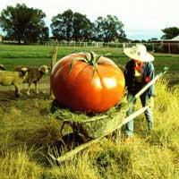 Полное ГМО.