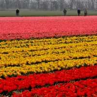 Разноцветные поля.