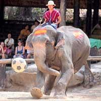 Даже слоны играют в футбол.
