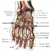 Применение мануальной терапии при болях в стопе (в суставе Лисфранка)