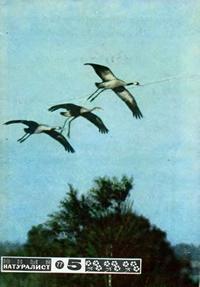 Юный натуралист №05/1977 — обложка книги.