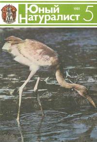 Юный натуралист №05/1981 — обложка книги.